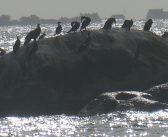Küstenimpressionen